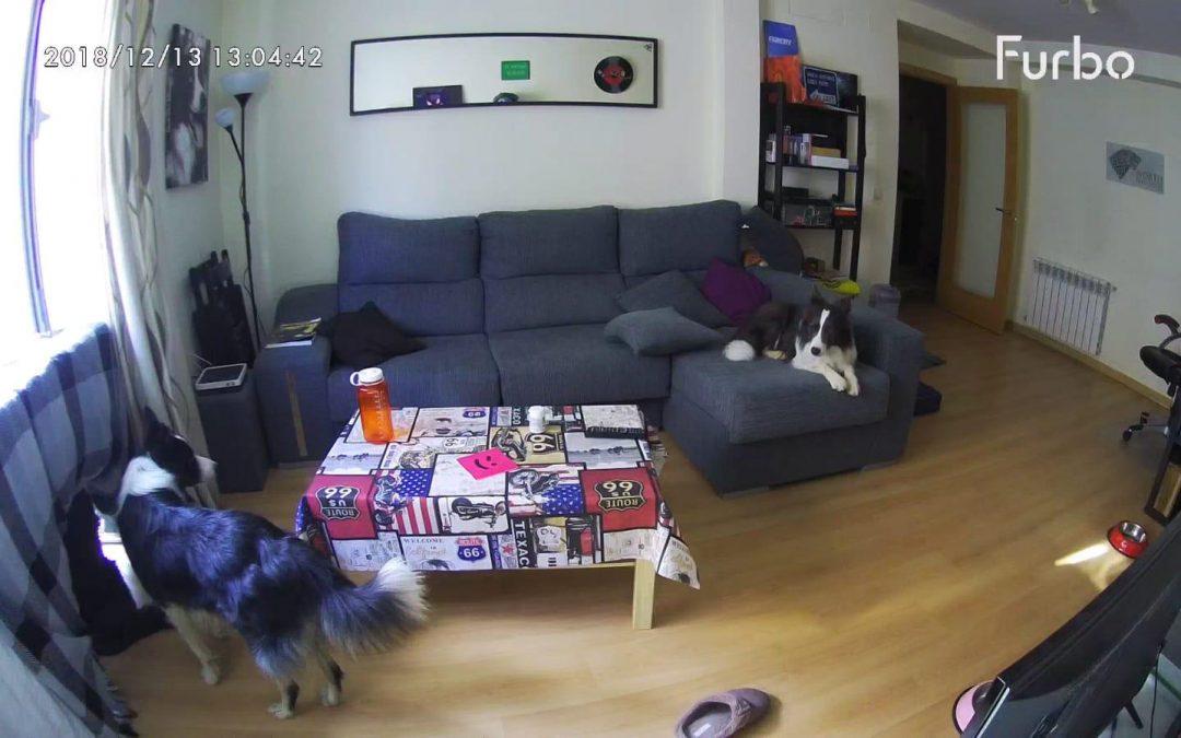 FURBO: La cámara para perros