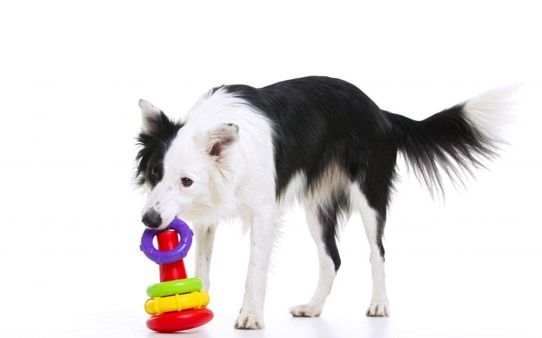 Influencia del ambiente en la forma de ser de tu perro