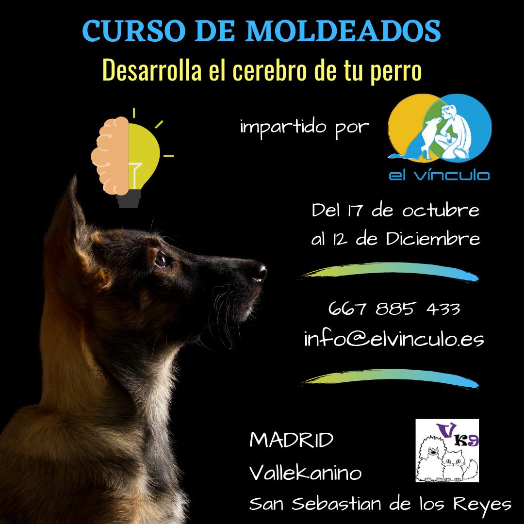 Curso entrenamiento canino en Madrid